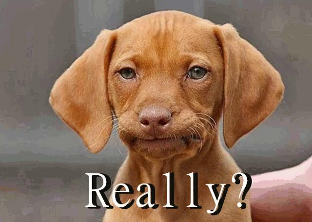 Image result for dog facepalm