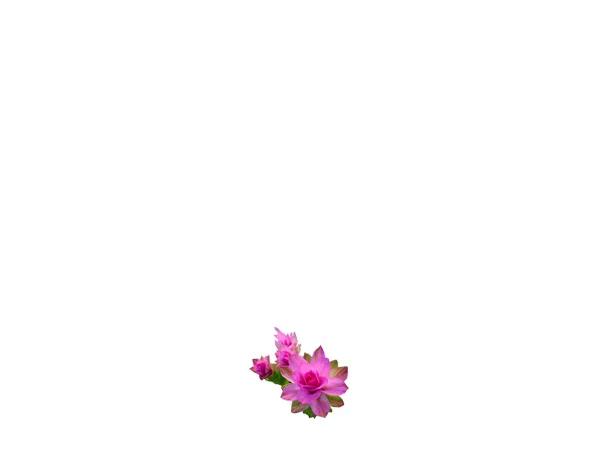 Bunga Gifs Tenor