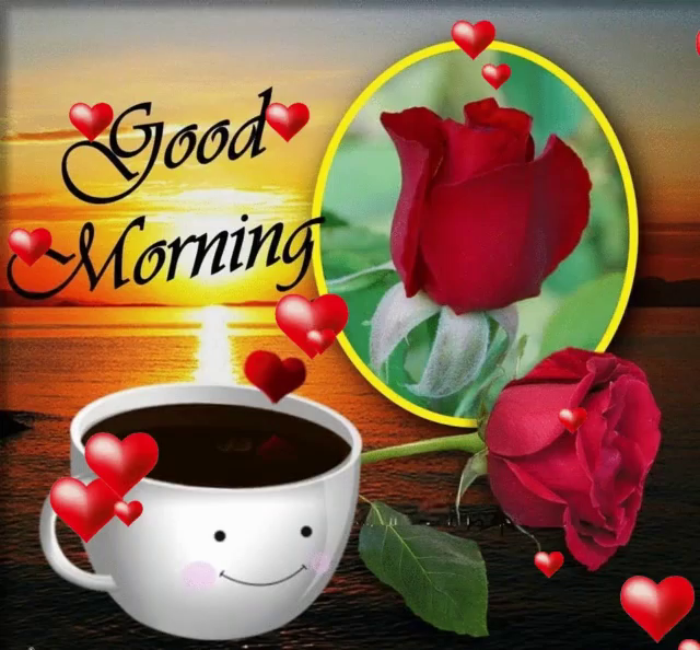 Good Morning Red Rose Gifs Tenor