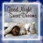 Good Night Sweet Dreams GIF - GoodNight SweetDreams Cats GIFs