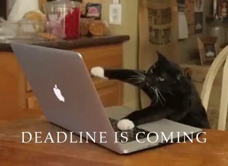 Image result for deadline meme