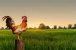 Bom Dia Grupo GIF - GoodMorning Rooster Chicken GIFs