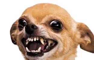 Angry Dog GIFs | Tenor