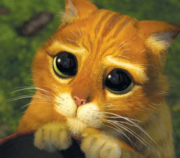 Cartoon Cats With Big Eyes Gifs Tenor