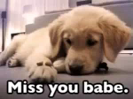 Miss You Babe GIF - Miss You Babe GIFs