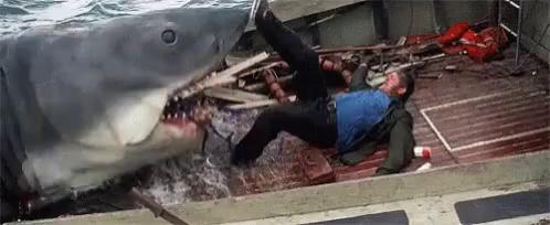 Shark Attack GIFs | Tenor