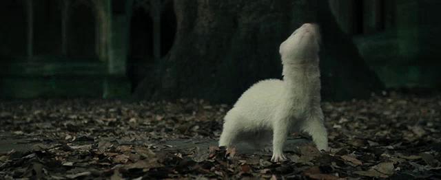 Ferret Malfoy