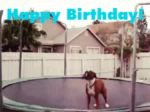 Funny Animals Happy Birthday GIF - FunnyAnimals HappyBirthday Trampoline GIFs