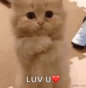 Kitten Love GIF - Kitten Love LuvU GIFs
