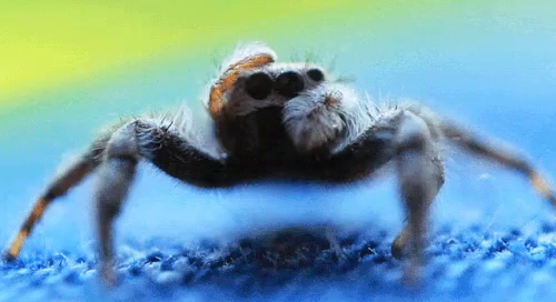 Scared Of Spiders GIFs | Tenor