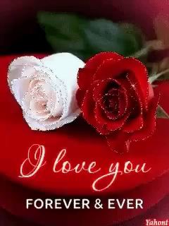 Red Roses I Love You Gifs Tenor