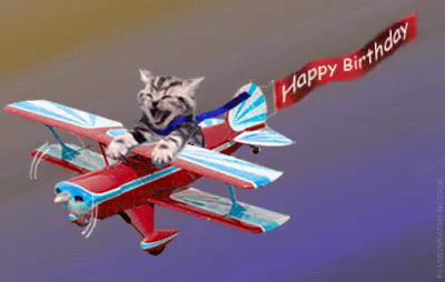 raw birthday cat gif birthday cat plane discover & share gifs