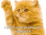 Bye Kitten ILove You Always And Forever GIF - ByeKitten ILoveYouAlwaysAndForever GIFs