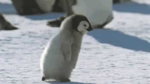Baby Penguin Gifs Tenor