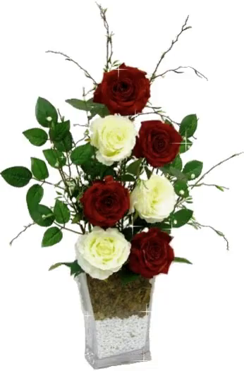 The Popular Beautiful Red Roses On White GIFs Everyones Sharing