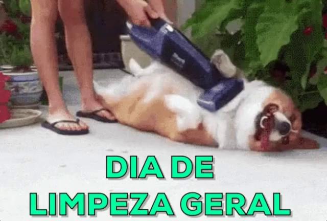 Carpet Cleaning Doggo Home The Honoroak
