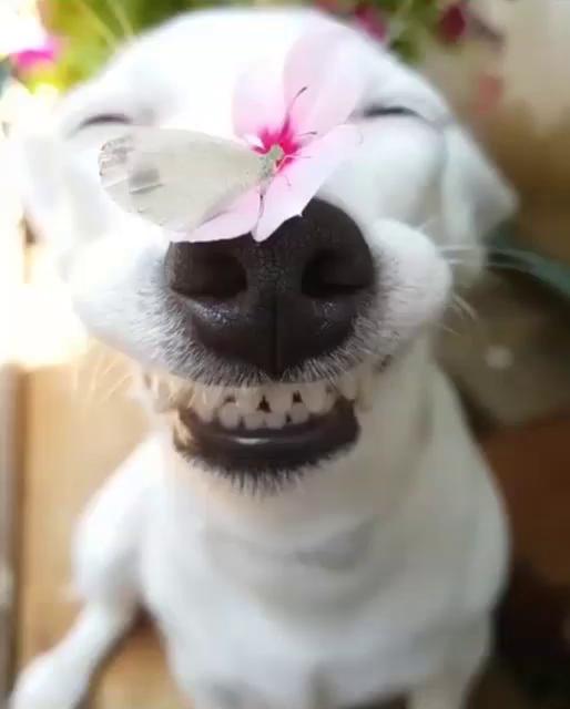 Dog Gifs Tenor