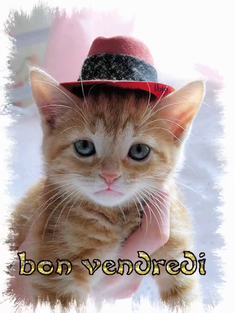 Bon Vendredi GIF - Bon Vendredi Kitty - Discover & Share GIFs