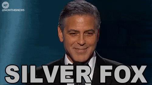 Silver Fox Gifs Tenor