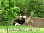 Love You GIF - LoveYou Chase LetMeLoveYou GIFs