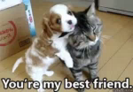 You're My Best Friend GIF - Dog Cat Bestfriend GIFs