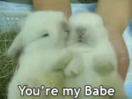 You're My Babe Bunny GIF - Cute Rabbit Babe GIFs