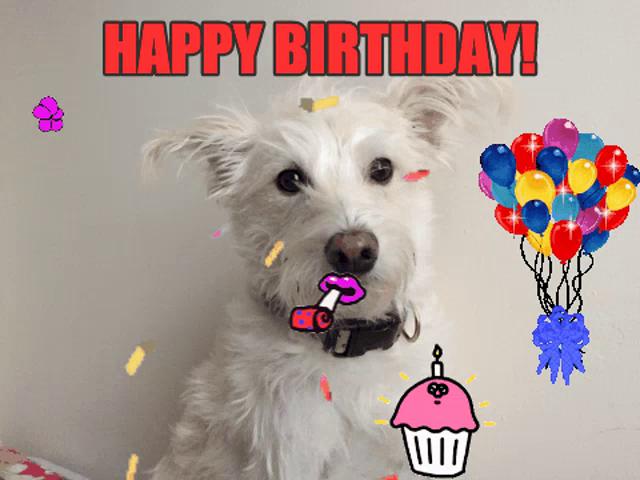Happy Birthday Funny Dog Gifs Tenor