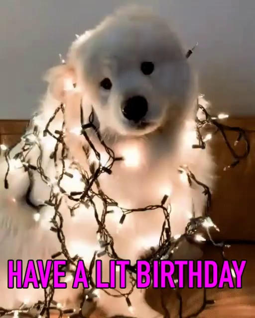 Dog Birthday Gifs Tenor