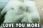 Bunnies Love You More GIF - Bunnies LoveYouMore Cuddling GIFs