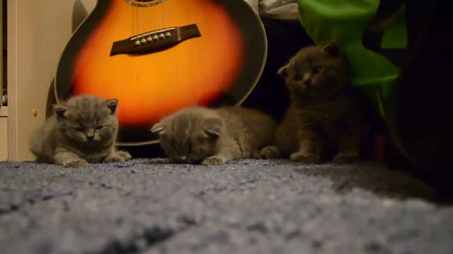 Christmas Kitties GIFs | Tenor
