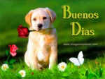 Buenos Dias Good Day GIF - BuenosDias GoodDay Puppy GIFs