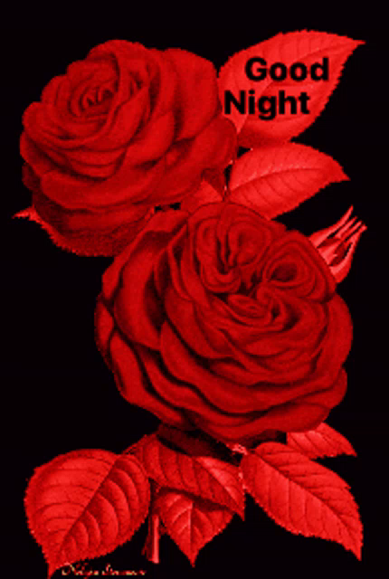 Good Night Red Gif Goodnight Red Rose Discover Share Gifs