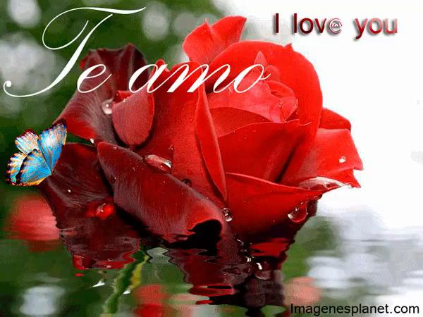 Bom Dia Meu Amor Rosas Românticas Gif Rosasromanticas Meuamor