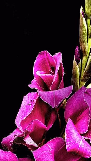 Nice pink flowers gifs tenor pink flowers gif pink flowers gifs mightylinksfo