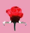 Love You Rose GIF - LoveYou Rose GIFs