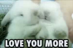 Love You More GIF - Bunnies LoveYouMore Cuddling GIFs