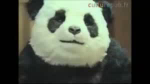 誕生日 パンダチーズ Never Say No To Panda GIF - HappyBirthday PandaCheese GIFs