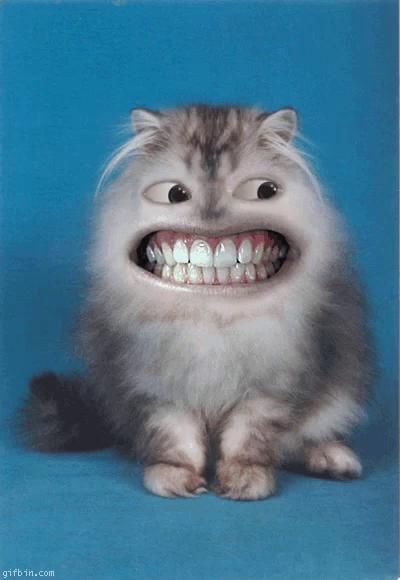 Image of: Pacu Fish Tenor Teeth Gifs Tenor