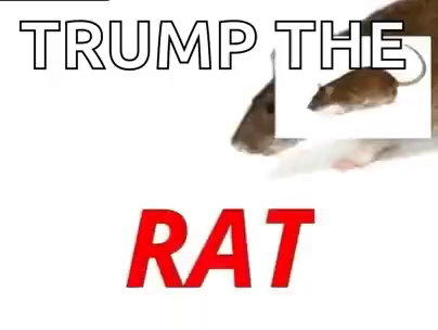 Rat Trump GIF - Rat Trump TrumpTheRat - Discover & Share GIFs