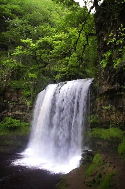Water Nature Waterfall Wood Leaf River Lake Stream