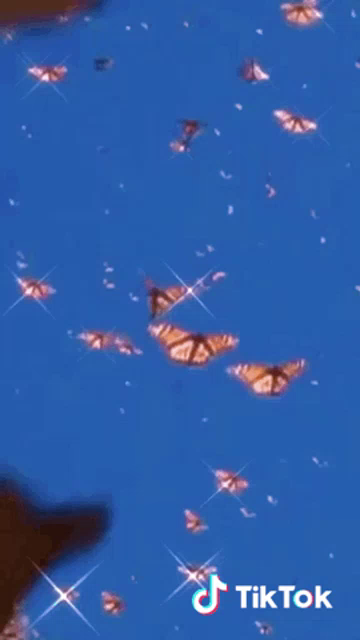 Butterfly Pretty Gif Butterfly Pretty Aesthetic Discover Share Gifs