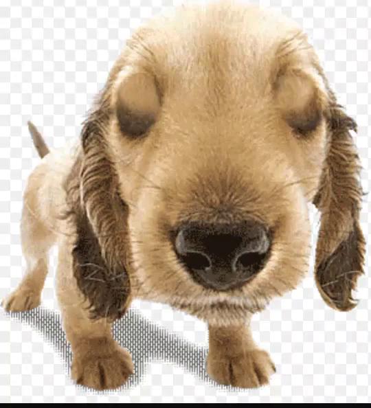 Sad Puppy Dog Eyes Gifs Tenor