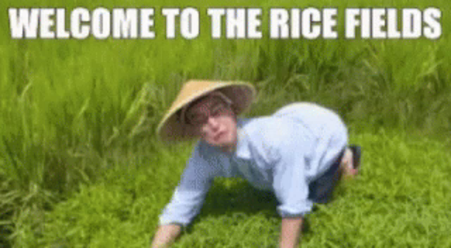 Welcome To The Rice Fields GIFs | Tenor