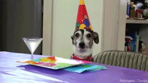 Dogs Happy Birthday GIF