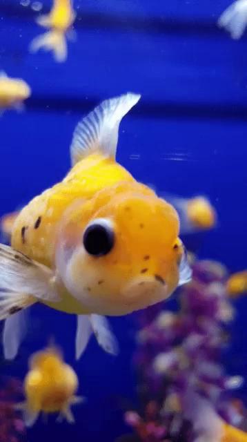 Blopp fisch