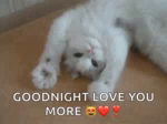Kitty Goodnight GIF - Kitty Goodnight LoveYouMore GIFs