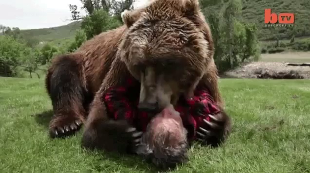 Furry bears raw
