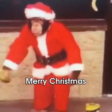 Christmas Funny GIFs   Tenor
