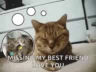 Missing My Bestfriend Sad GIF - MissingMyBestfriend Sad Cat GIFs