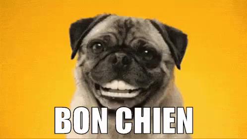 Bon Chien Gif Bonchien Discover Share Gifs